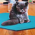 I meditate, I do yoga, I chant