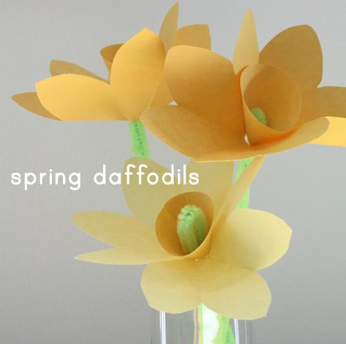 Flower daffodils