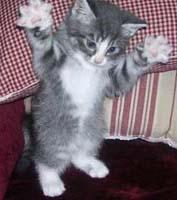 Kitten_war_1