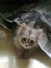 Kitten_war_2