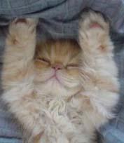 Kitten_war_4
